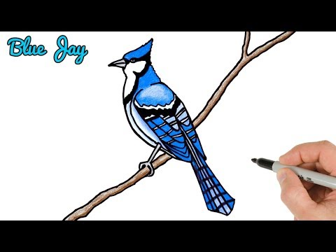 How To Draw Blue Jay Bird Easy | Drawing And Coloring Art Tutorial