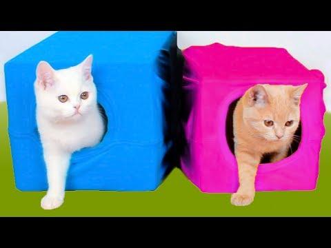 10 Amazing Ideas for Cat Owners – 10 Pomysłów Dla Właścicieli Kotów
