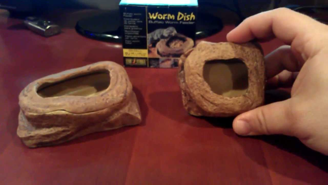 & Exo Terra Worm Dish Review - YouTube