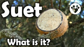 What is Suet?