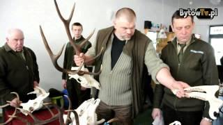 Ocena poroży jeleni byków w Bytowie