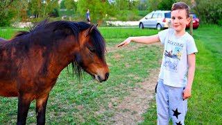 Животные для детей - маленькая лошадка Пони