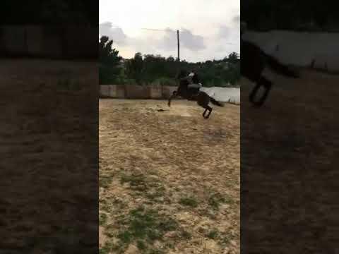 desbastando égua