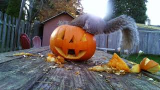 Halloween treat for the squirrels