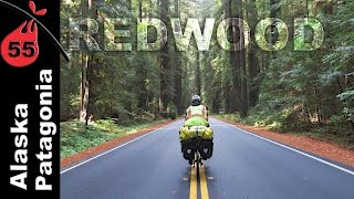 Redwoods | California