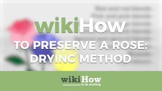 How to Preserve a Rose Using the Drying Method
