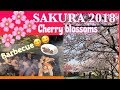 SAKURA 2018 ( HANAMI or CHERRY BLOSSOMS)