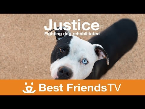 Best Friends TV Episode 7: Justice Fighting Dog Rehabilitated