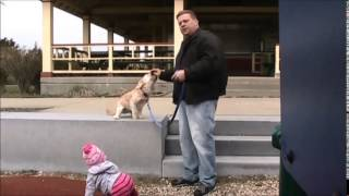 New Bedford Ma Dog Training - How To Train A Small Dog