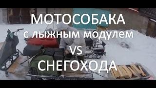 Мотособака KOiRA с лыжным модулем против снегохода (тест драйв)