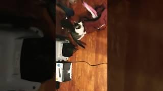 Funny Cat Video! Kitten Hides In Duffle Bag!