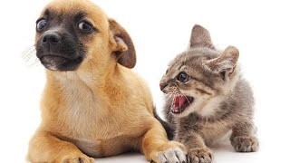 🐈 Cats vs Dogs 🐕 Compilation of jokes with cats for a good mood! 😸