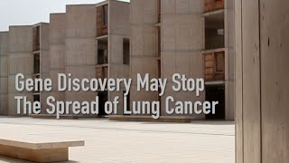 Gene Discovery May Stop The Spread Of Lung Cancer