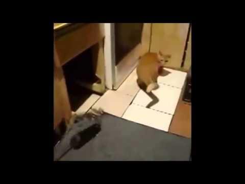 Cat Vs Rat: Rat -1 Cat - 0