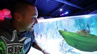 I NEED THIS AQUARIUM!!!