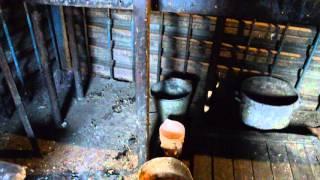 В одном из кафе Тынды место приготовления шашлыка облюбовали кошки