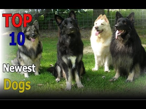 Top 10 newest dog breeds | Top 10 animals