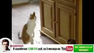 Самые смешные кошки 2014 #5