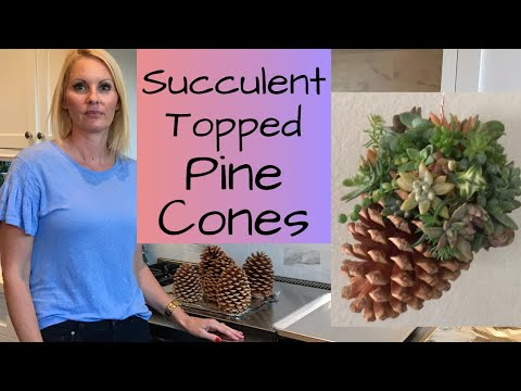 DIY How to make hanging SUCCULENT topped PINECONE planters  tutorial with MOODY BLOOMS