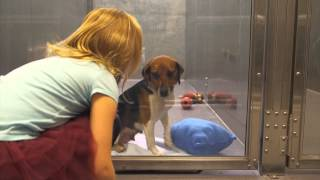 Shelter Dog Suzie Gets Adopted - MD SPCA VERSION