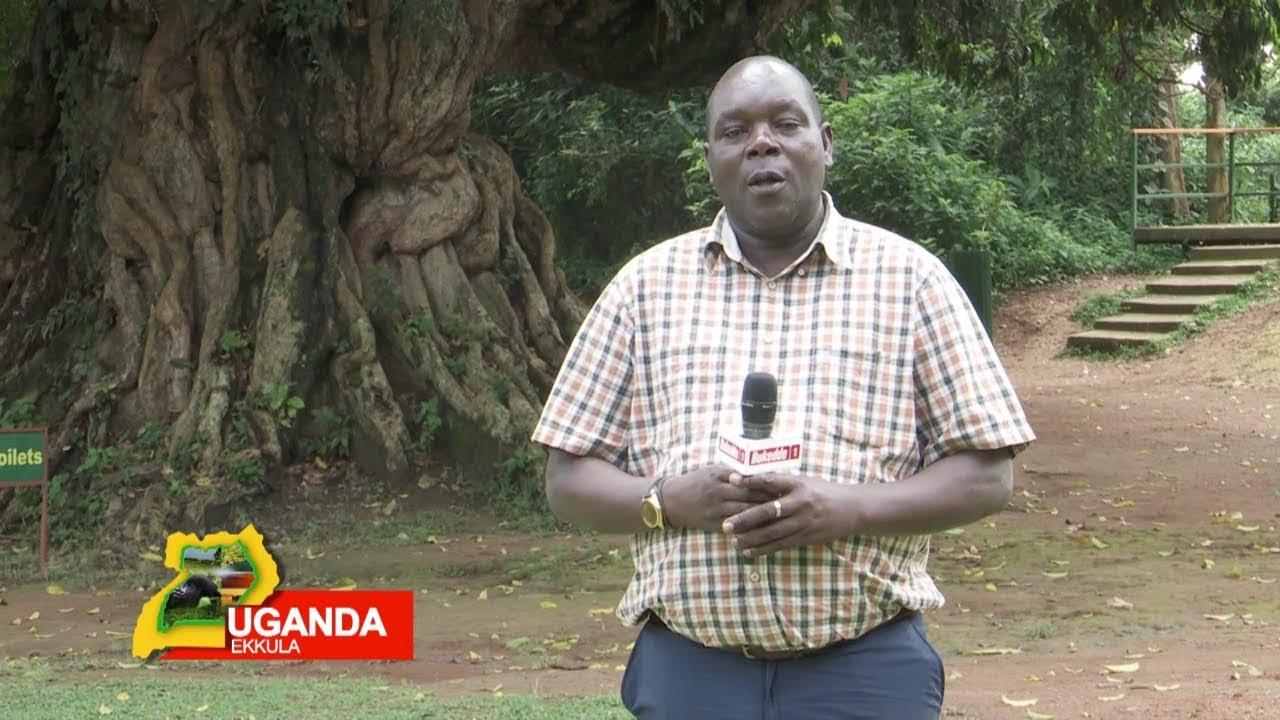 Download UGANDA EKKULA :Omusota  gwa Ttimba mu kkuumiro ly'ebisolo A