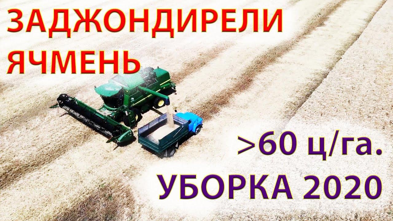 УБОРКА 2020 | Днепр косит больше 60 ц\га #джондирW550 #уборказерновых #ячменьозимый