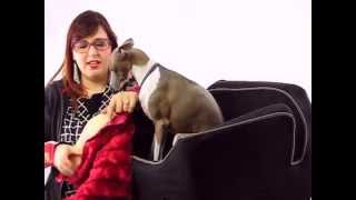 Pet Product Review - Pet Car Seat - Snoozer Lookout II