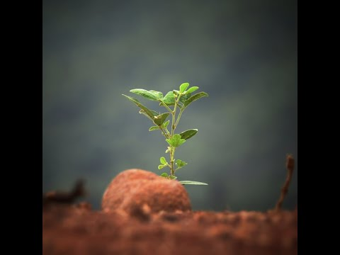 """The Urantia Book for Dummies: Chptr 2 section 2 """"CIVILIZATION IN CRISIS #2"""""""