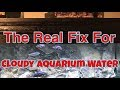Why Is My Aquarium Cloudy? Here Is How To Clear Cloudy Aquarium Water