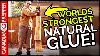 This Natural Survival Glue is CRAZY Strong!