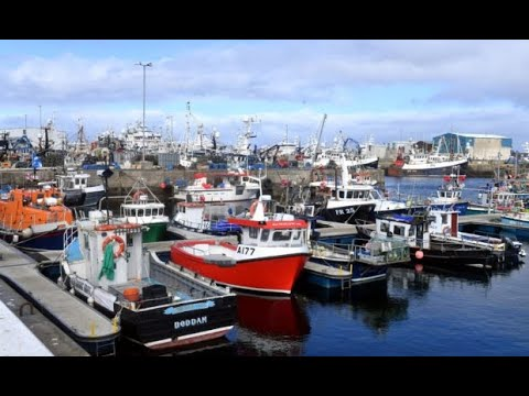 Urgent meeting sought to resolve Brexit mess which has left fishing industry suffering huge losses