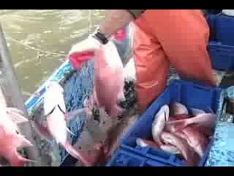 COMMERCIAL FISHING FOR RED SNAPPER