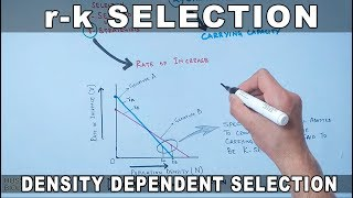r-k Selection | Density Dependent Selection