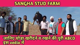 SANGHA STUD FARM | गामा मशहूर घोड़ा |  GAMA MARWARI HORSE