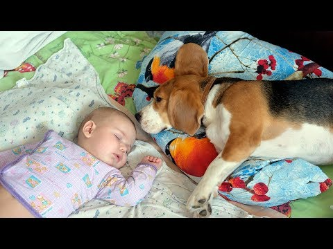 Babies and Animals Sleeping Together - Cute Baby and Animal Videos