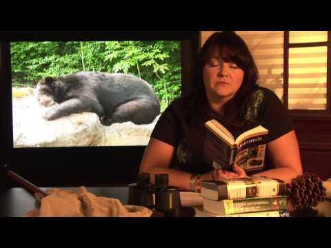 Animal Habitats : Where Do Black Bears Live?