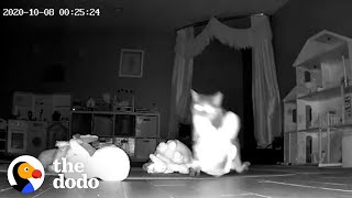 Hidden Camera Catches Cat Bringing Gifts To Her Family | The Dodo Cat Crazy