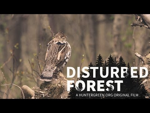 Disturbed Forest - The Forsaken Science of Healthy Forests