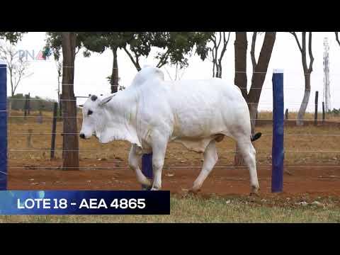 LOTE 18 - AEA4865 - NELORE