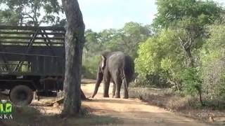 Фото Release Of Huge Elephant