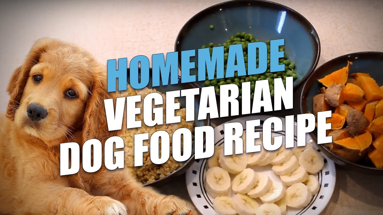 Homemade vegetarian dog food recipe simple to make youtube homemade vegetarian dog food recipe simple to make forumfinder Choice Image