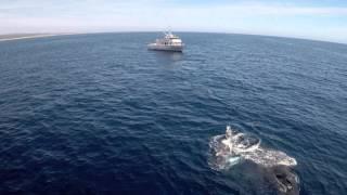 Humpback Whales having a laugh - Big Blue Live: Episode 1 - BBC One