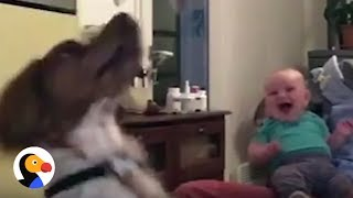 Baby Finds Jumping Dog Hilarious | The Dodo