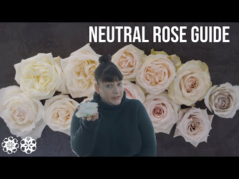 Neutral Rose Reference Guide-All The Wedding Roses