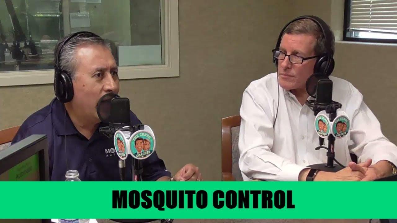 Mosquito, The Florida State Bird - #51, The Condo Coaches