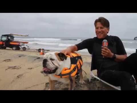 Skateboarding & Surfing Dog