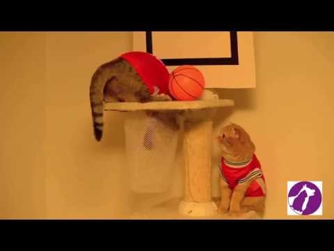Cats Playing With Basketball (Funny Cats Video)