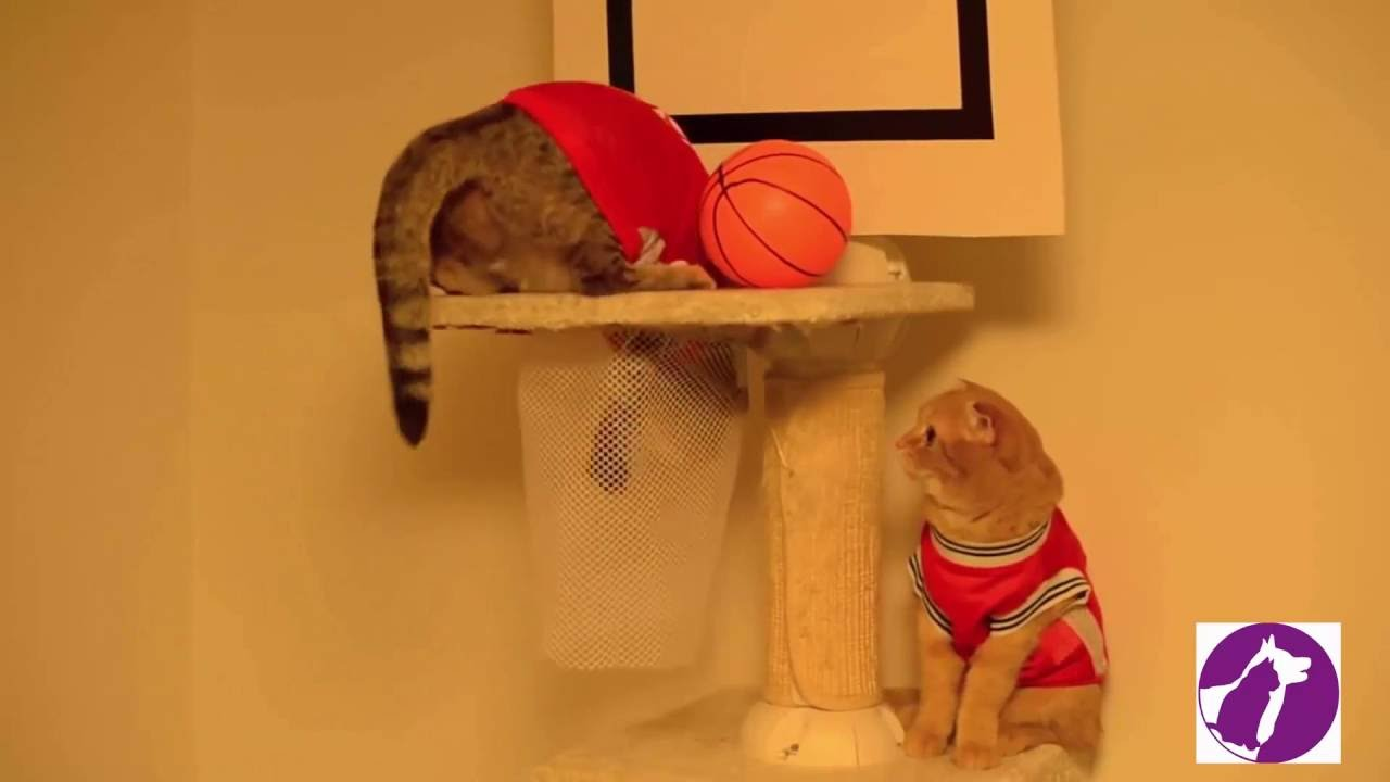 cats playing with basketball  funny cats video