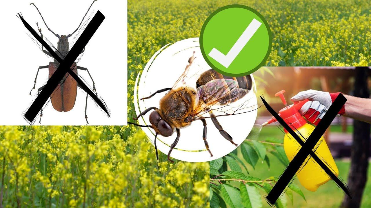 Горчица спасает сада от вредителей и поможет пчелам экологически чистым способом