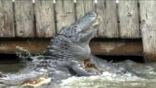 Gator Land, Orlando Florida